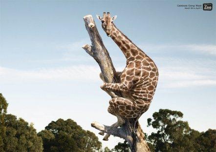 girafa1.jpg
